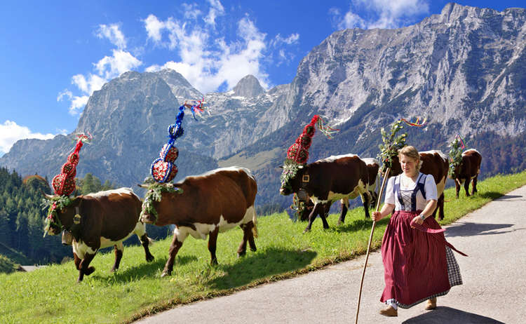 "Queens of the Pastures: ""Almabtrieb"" in Bavaria"