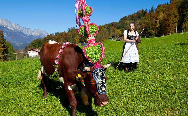 Almabtrieb, Kuh mit Fuiklschmuck