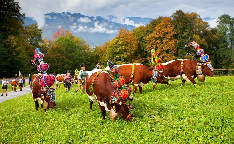 Almabtrieb im Berchtesgadener Land