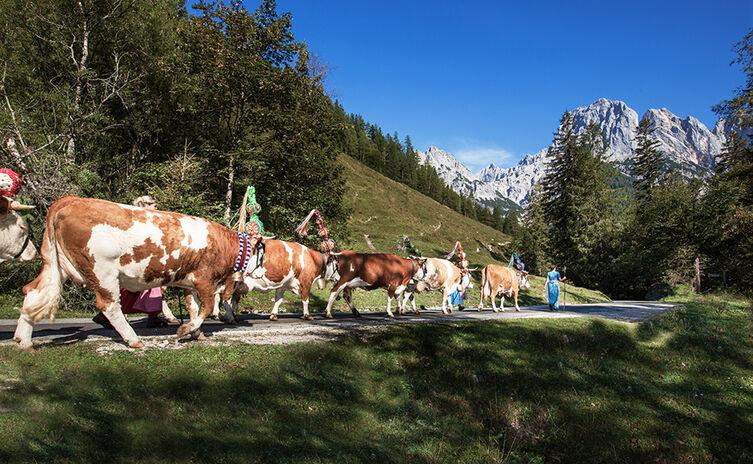 Almabtrieb im Nationalpark Berchtesgaden