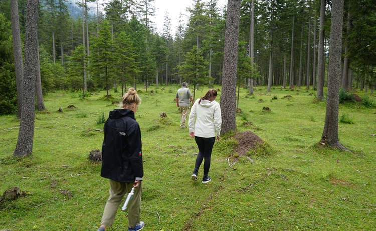 geführte Wanderung mit dem Nationalpark Ranger zu den Ameisen
