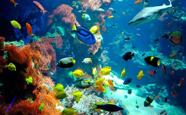 Aquarium Haus Der Natur