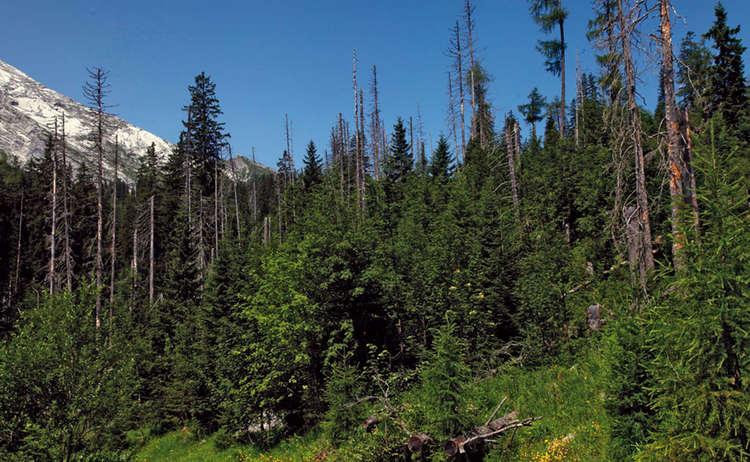Auf Dieser Flaeche Nahe Der Kuehroint Alm Im Nationalpark Berchtesgaden Kehrt Der Bergmischwald Zurueck