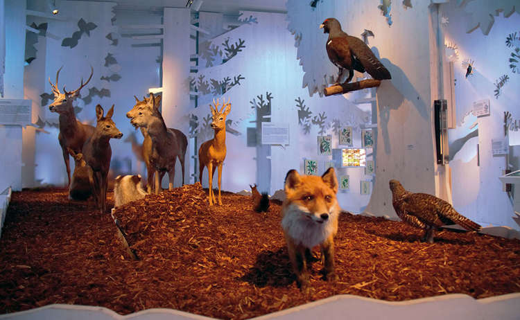 Ausstellung Lebensraum Wald