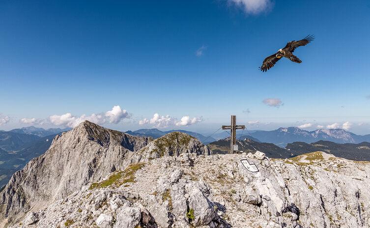 Wally kreist ums Gipfelkreuz des Stadelhorns