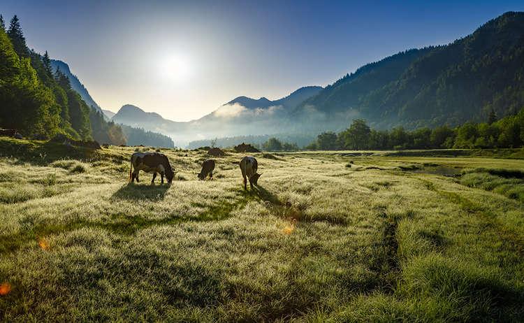 Bergbauernmilch Herkunft