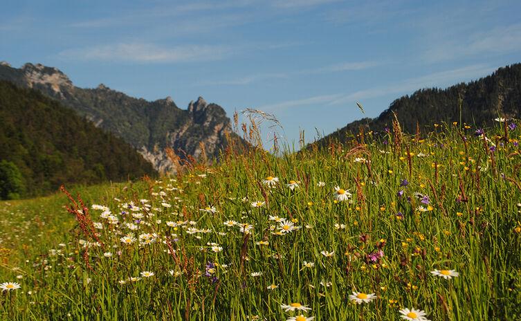 Bischofswiesen Schlafende Hexe Lattengebirge