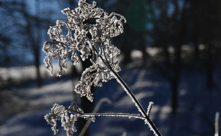 Blume Winter Bischofswiesen