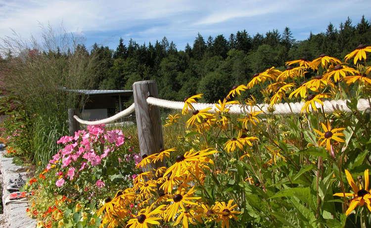 Blumen Am Natur Erlebnisweg Bischofswiesen