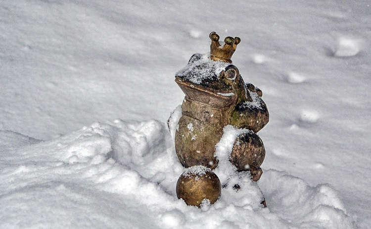 Froschkoenig Maerchenpfad Bischofswiesen Winter