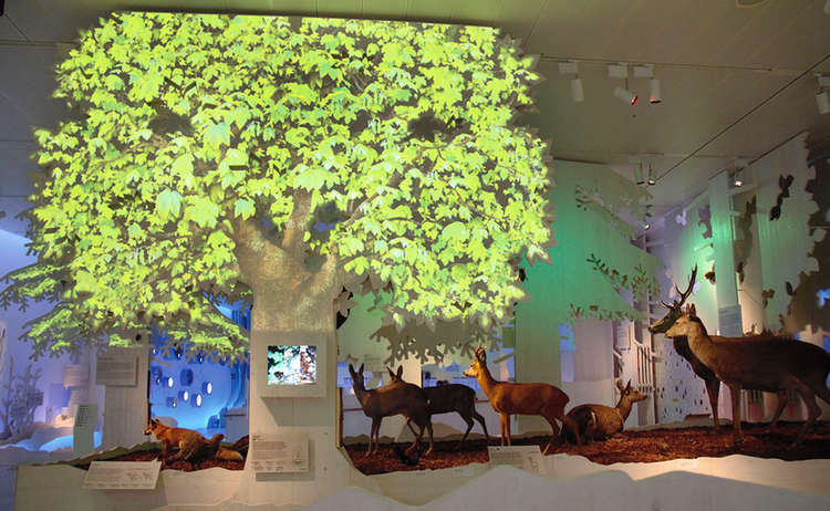 Haus Der Berge Ausstellung Wald