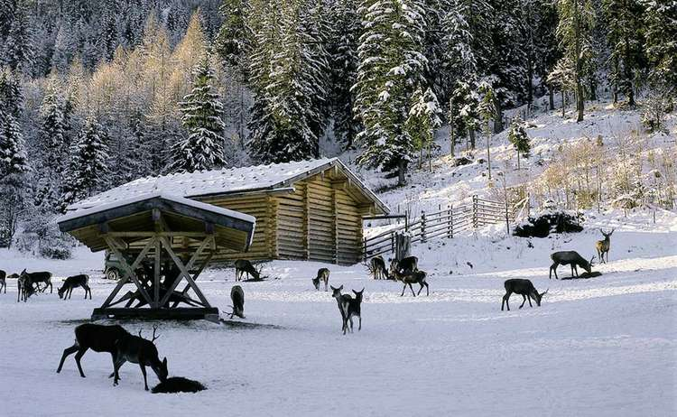 Hirschfütterung im Winter im Klausbachtal