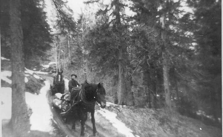 Holzruecken Mit Pferd