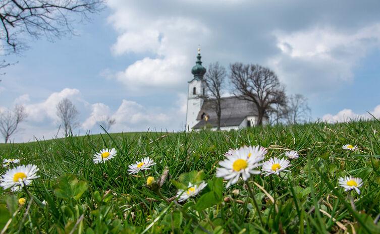 Frühling am Johannishögl, Piding