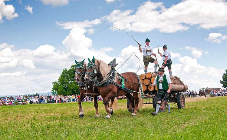 Kaltblut Pferd Fest Holzhausen Holzfuhrwerk C Roha