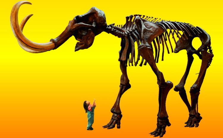 Mammutmuseum 5