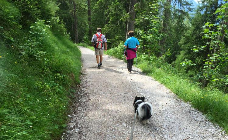 Mit Hund Wandern Im Nationalpark Berchtesgaden