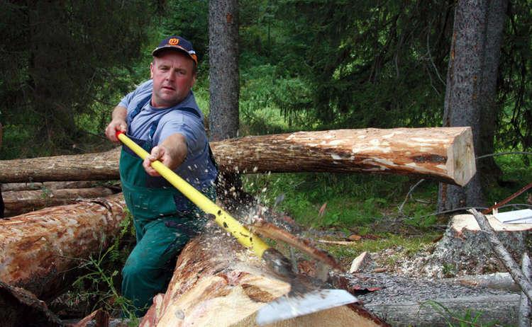 Mit Schaeleisen Entfernen Waldarbeiter Im Nationalpark Berchtesgaden Die Baumrinde Der