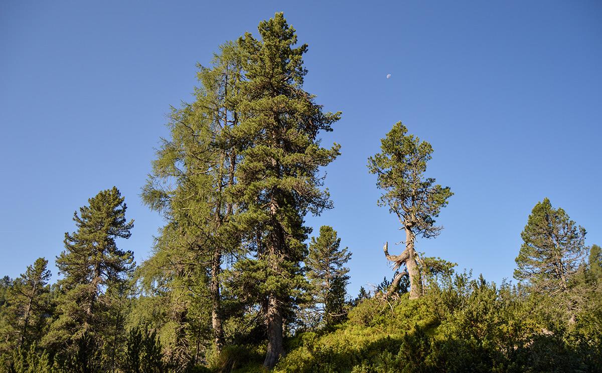 Naturwaldreservat Reiter Alm 10