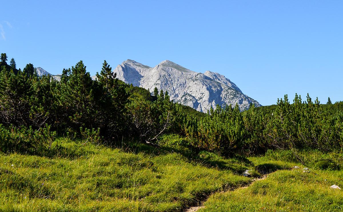 Naturwaldreservat Reiter Alm 6