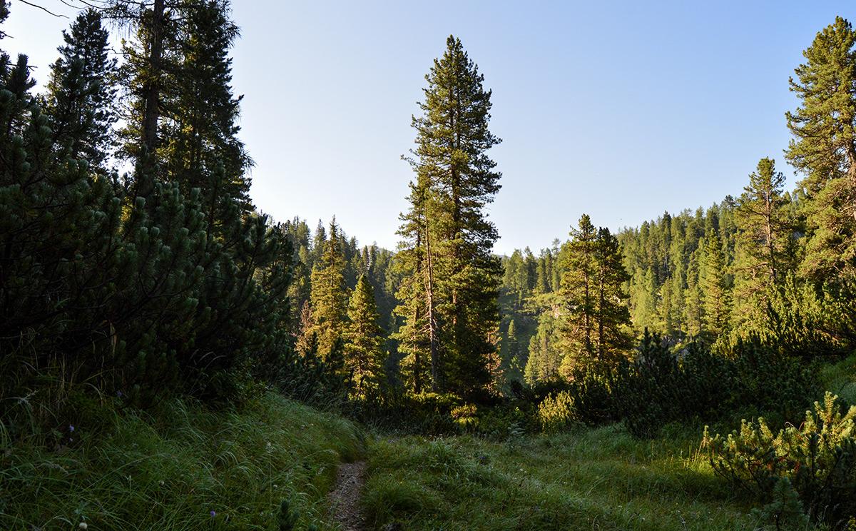 Naturwaldreservat Reiter Alm 7