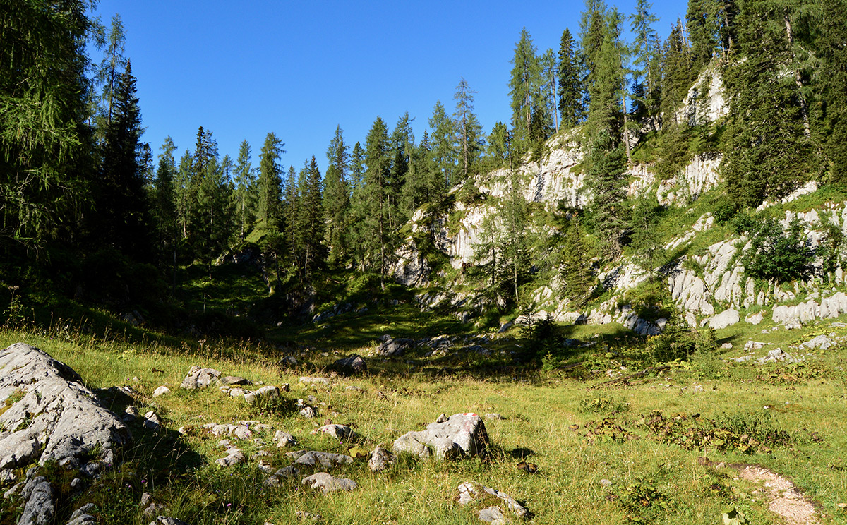 Naturwaldreservat Reiter Alm 8