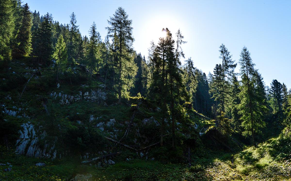 Naturwaldreservat Reiter Alm 9