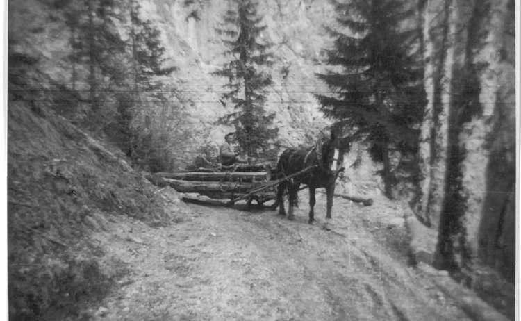Pferd Beim Holzruecken