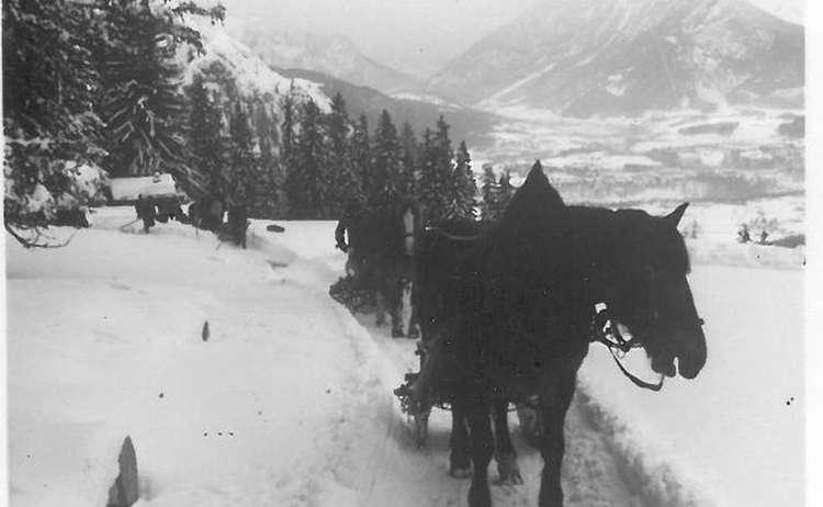 Pferde Beim Holzruecken