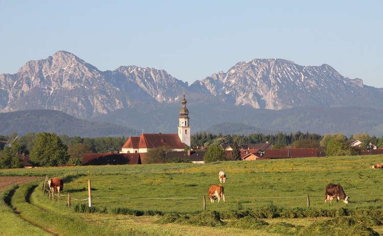 Saaldorf Kuehe Kirche Berge