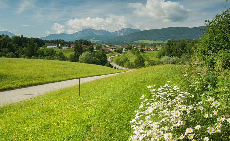 Stauseeweg Teisendorf Flora