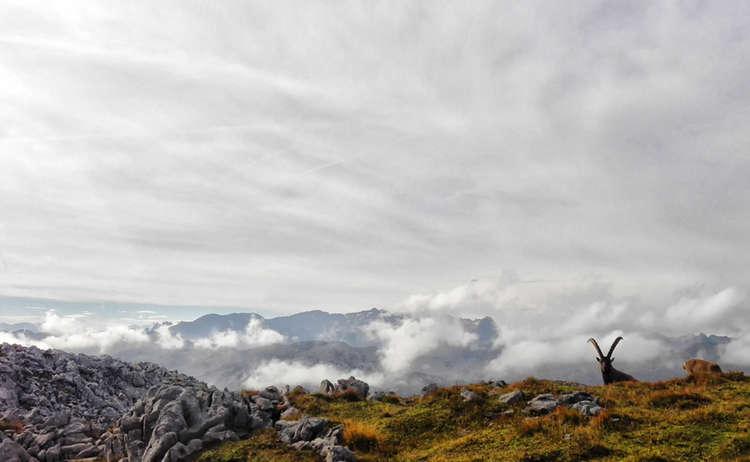 Kleine Reibn: Bergtour ins Revier der Steinböcke