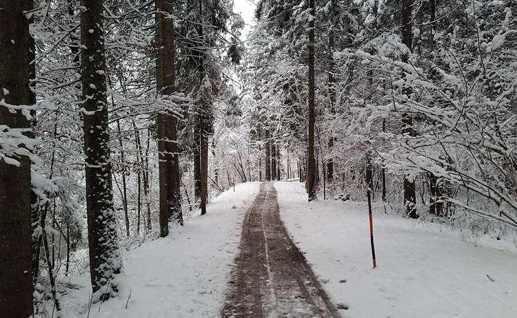 Winterwandern Am Triftweg