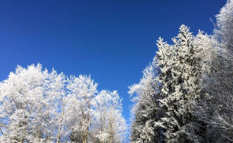 Winterwanderung Berchtegsdaen Baeume