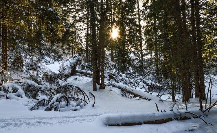 Wintewanderung durch den Wald am Hochschwarzeck